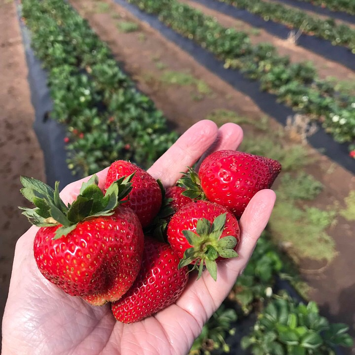 Where to Find Berries in Texas