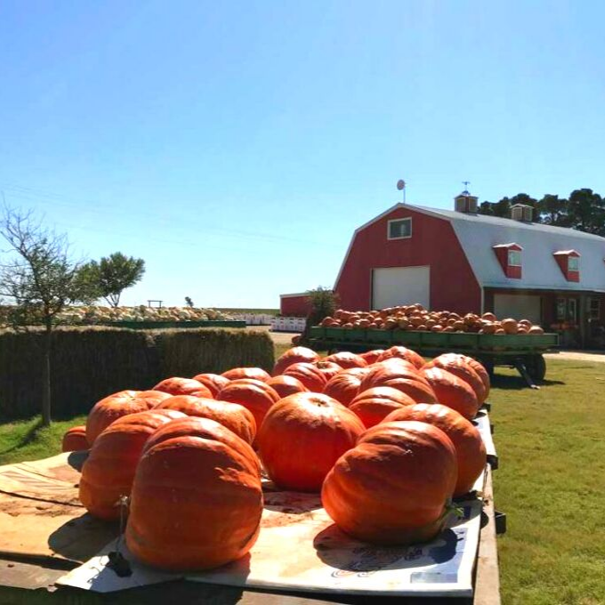 Top 10 Texas Day Trips to Take in the Fall